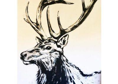 Five Point Bull Elk